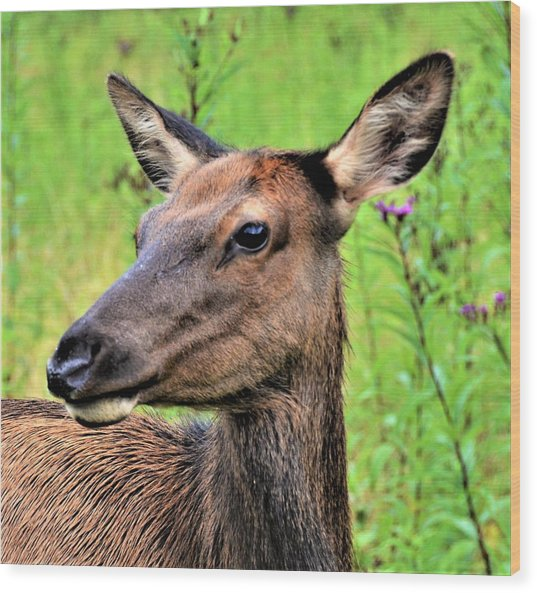 Attentive Yearling Wood Print
