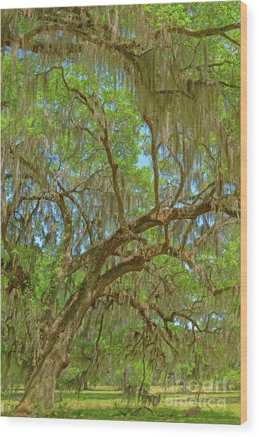 Attraction Wood Print by Steven Dillon