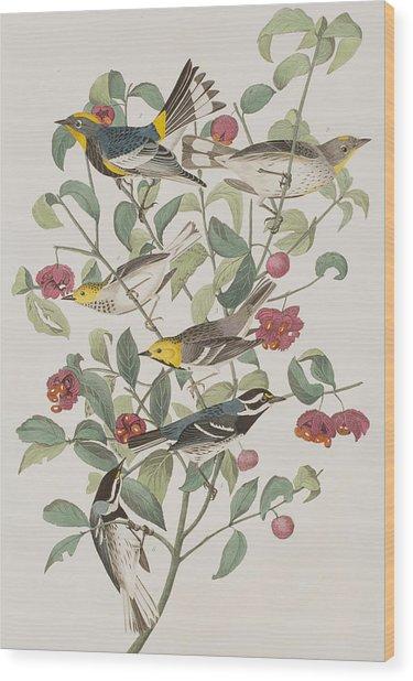 Audubons Warbler Hermit Warbler Black-throated Gray Warbler Wood Print