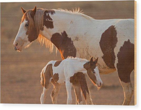 August Foal Wood Print