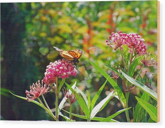 August Monarch Wood Print