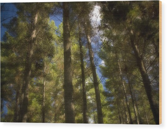 Aupouri Forest Wood Print by Graham Hughes