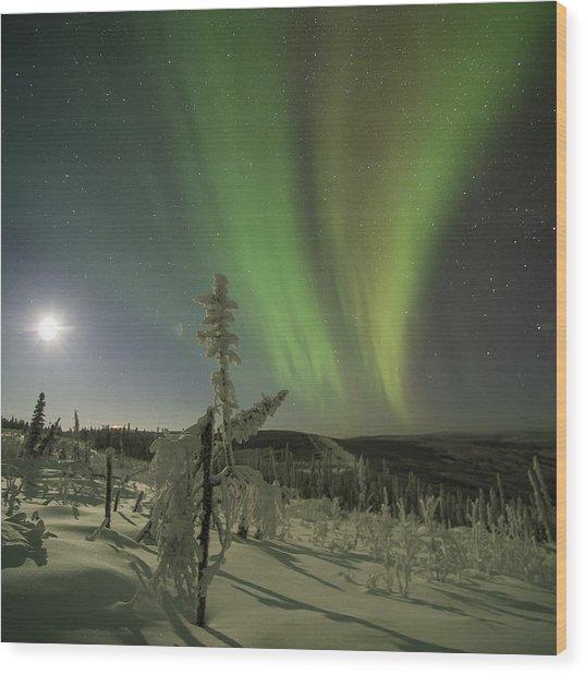 Aurora In The Hoar Frost Wood Print