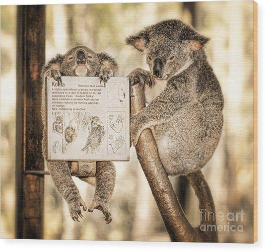 Wood Print featuring the photograph Koala Australia  by Juergen Held