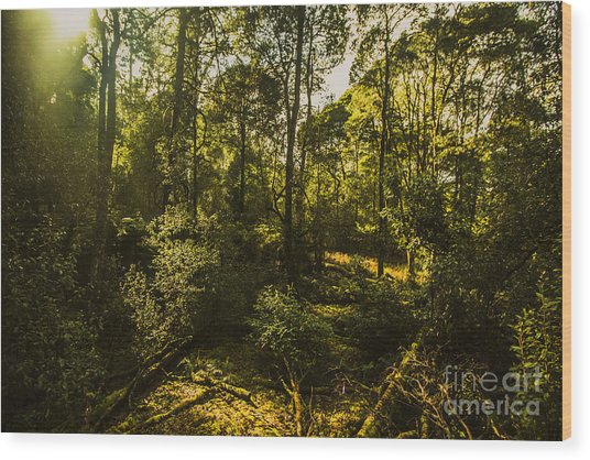Australian Rainforest Landscape Wood Print