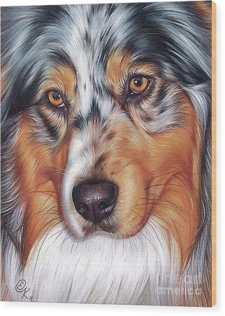 Australian Shepherd Wood Print