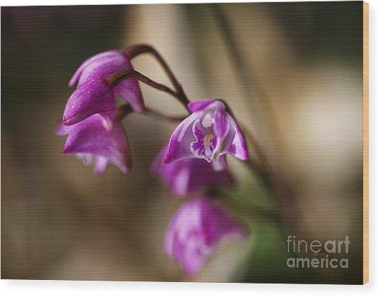 Australia's Native Orchid Small Dendrobium Wood Print