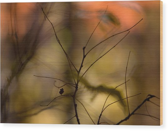 Wood Print featuring the photograph Autumn Abstract by Jane Melgaard