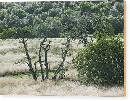 Autumn And Grass In Isle Of Skye, Uk Wood Print