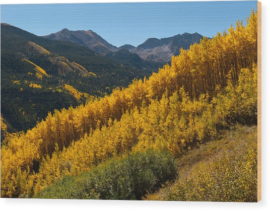 Autumn Aspen Near Castle Creek Wood Print