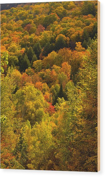 Autumn At Acadia Wood Print