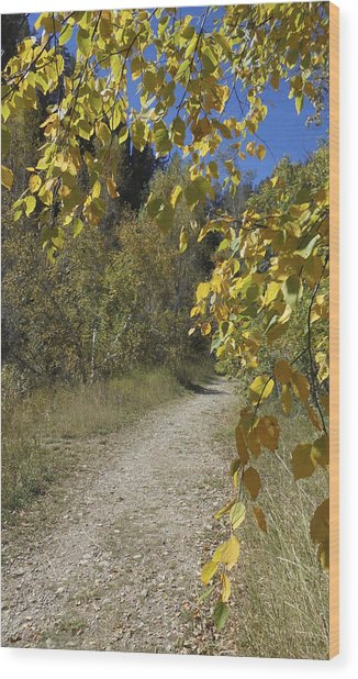 Autumn At Iron Creek Wood Print