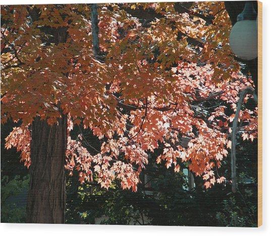 Autumn Beauty Wood Print by Martin Morehead