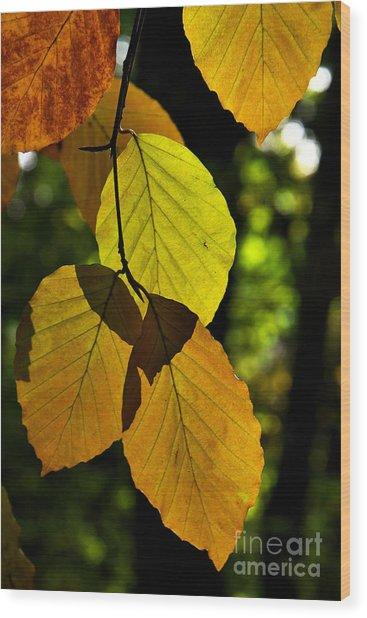 Autumn Beech Tree Leaves Wood Print