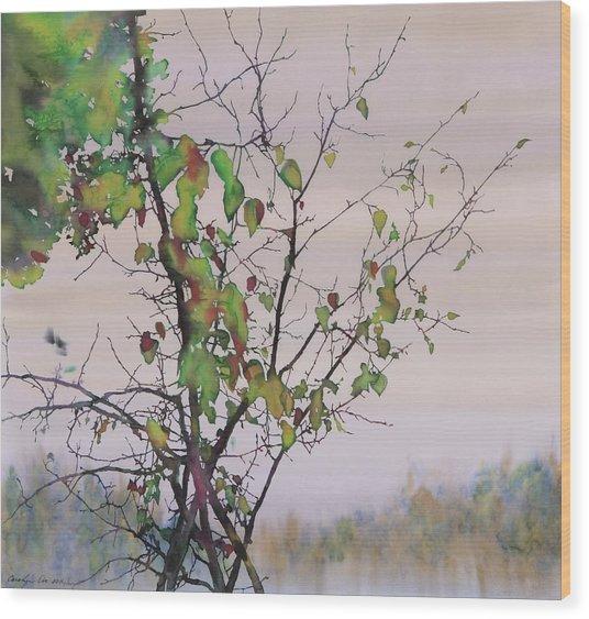 Autumn Birch By Sand Creek Wood Print