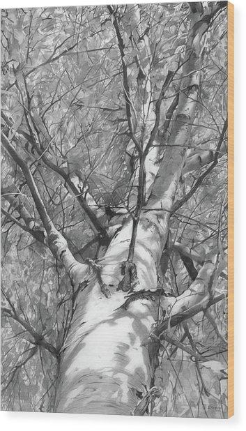 Autumn Birch Wood Print