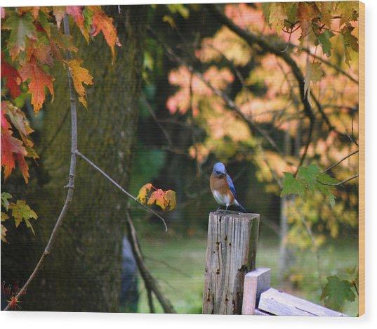Autumn Blue Bird Wood Print