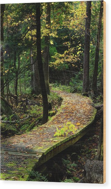 Autumn Boardwalk Wood Print