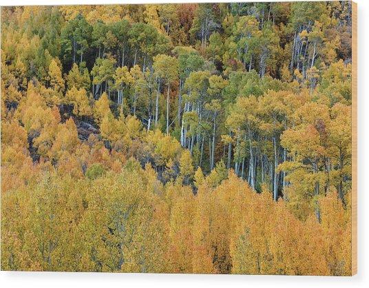 Wood Print featuring the photograph Autumn Bounty by Stuart Gordon