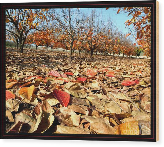 Autumn Colors 02 Wood Print by Arik Baltinester