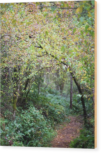 Autumn Colors In The Forest Wood Print