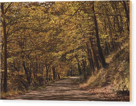 Autumn Colours Wood Print by Nikos Stavrakas