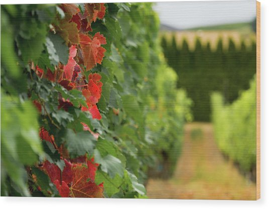 Autumn Comes To The Vineyard Wood Print