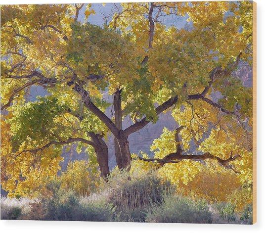Autumn Cottonwood - Zion Wood Print