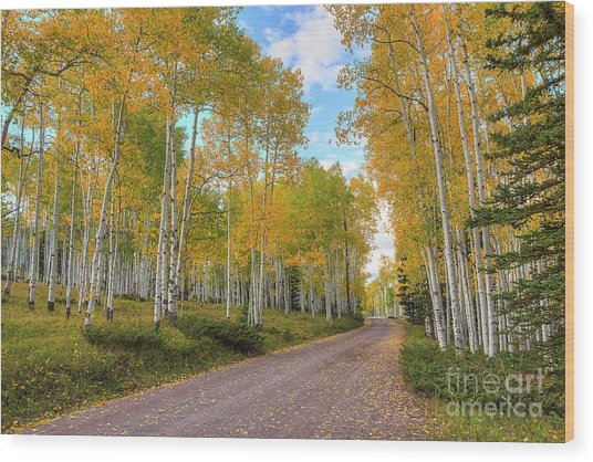 Wood Print featuring the photograph Autumn Country Road by Spencer Baugh