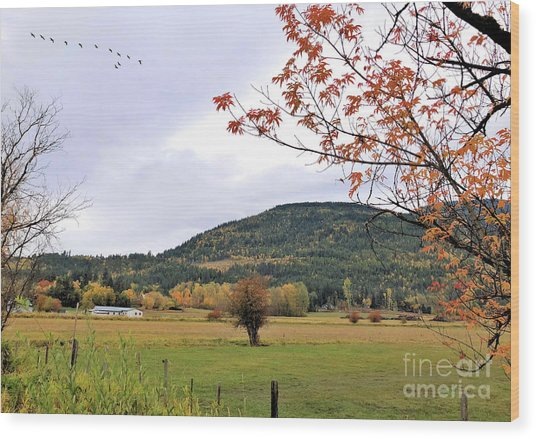 Autumn Country View Wood Print