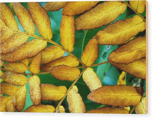 Autumn Fern 2 Wood Print by Tony Ramos