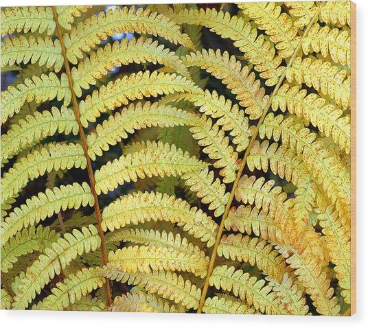 Autumn Ferns Wood Print by Tony Ramos