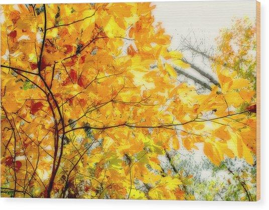 Autumn Flutter Wood Print by John Mueller