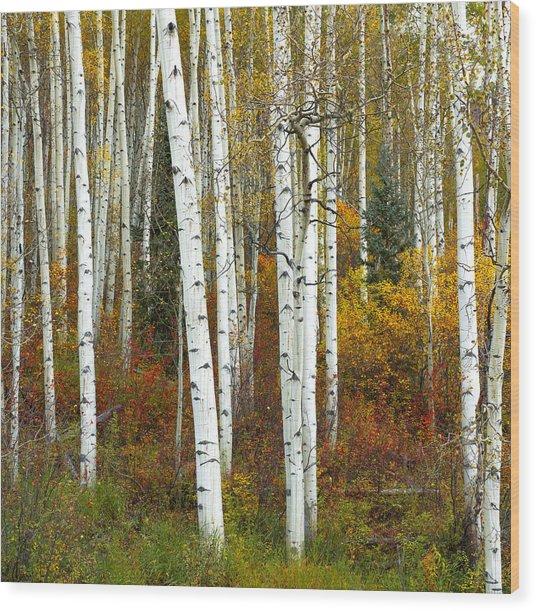 Autumn Forest Beauty Wood Print