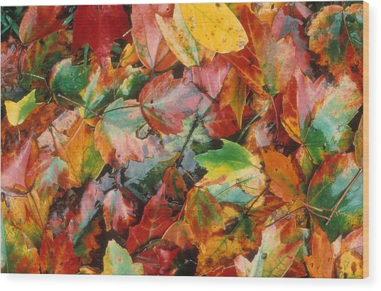 Autumn Forest Floor Wood Print by Gerard Fritz