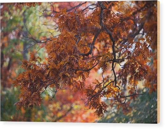 Wood Print featuring the photograph Autumn Fury by Jane Melgaard