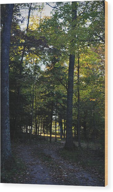 Autumn Glen Wood Print