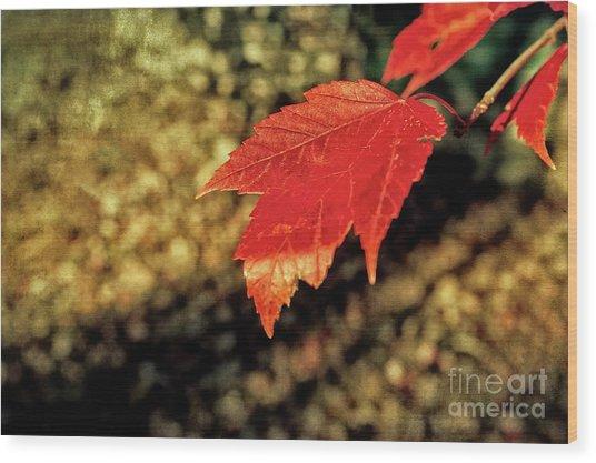 Autumn Gold Wood Print