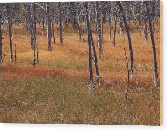 Autumn Grasses In Yellowstone Wood Print