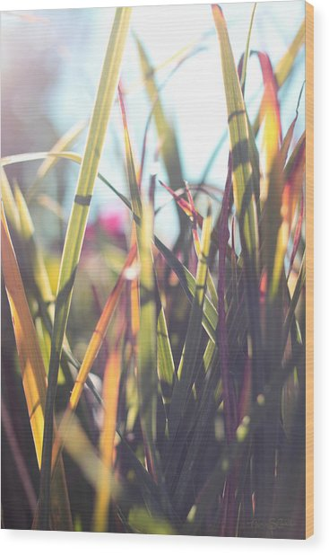 Autumn Grasses Wood Print