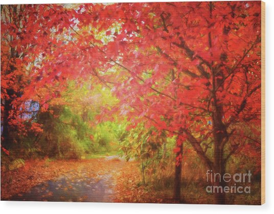 Glorious Foliage On The Rail Trail Wood Print