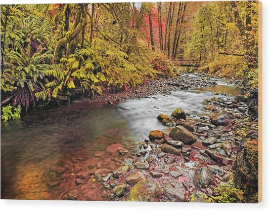 Autumn In An Oregon Rain Forest  Wood Print
