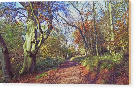 Autumn In Ashridge Wood Print