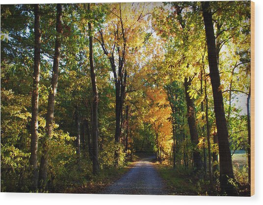 Autumn In Missouri Wood Print