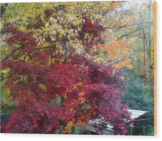 Autumn In October Wood Print by Misty VanPool