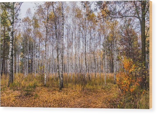 Autumn In The Birch Grove Wood Print