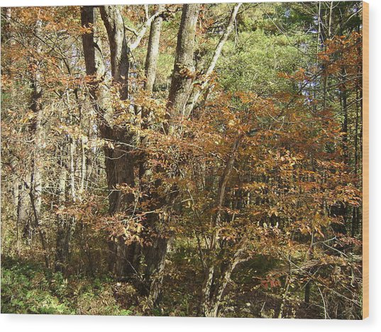 Autumn In The Country Wood Print by Paula Prindle