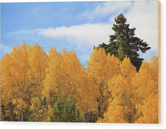 Autumn In The Owyhee Mountains Wood Print