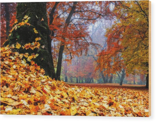 Autumn In The Woodland Wood Print