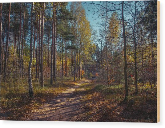 Autumn In The Woods Wood Print